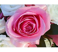 Pink Rose and Ribbon Photographic Print