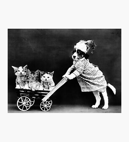 Puppy Taking Kittens for a Walk Photographic Print