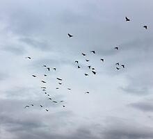 Flight of cockatoos by superferretIX