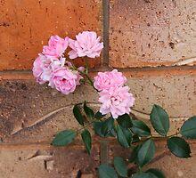 Wall-flower  by superferretIX