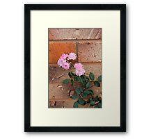 Wall-flower  Framed Print