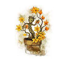 Orange Blossoms Baby Groot Photographic Print