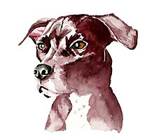 Monochromatic Pit Bull Dog Watercolor Painting Photographic Print