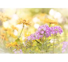 Summer Dreaming - Linden Gardens Photographic Print
