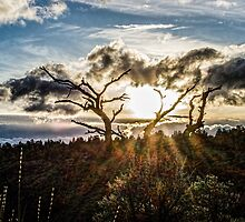 Clouds Assist /Redmond by Richard Bozarth