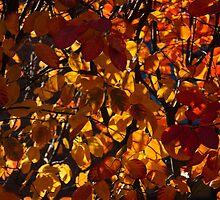 Colourful Sunny Autumn Patterns by Georgia Mizuleva