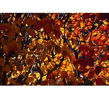 Colourful Sunny Autumn Patterns Photographic Print