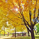 Autumn in the Park by lorilee