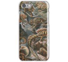 Assorted Lizards  iPhone Case/Skin