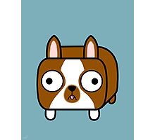 Boston Terrier Loaf - Red Brown Boston Dog Photographic Print