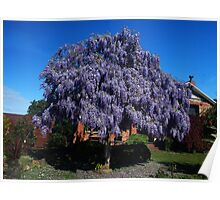 Wisteria shaped as a Tree  Poster