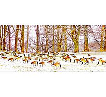 A Gaggle Of Geese Photographic Print