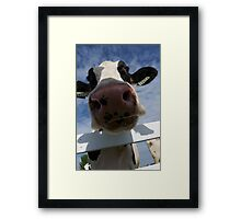 Up Close Of A Cow Framed Print