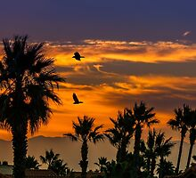 Sunrise in California by LudaNayvelt