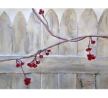 Winter Berries Watercolor Photographic Print