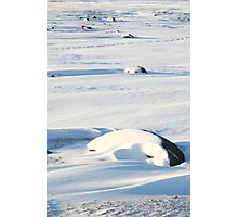 Early Morning on the Tundra #2, Churchill, Canada Photographic Print