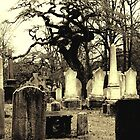 Cemetery Tree by Ethna Gillespie