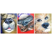 3 Dogs Waking Photographic Print
