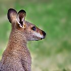 Wallaby.... by Tracie Louise