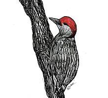 Red-bellied Woodpecker by Stephanie Adams