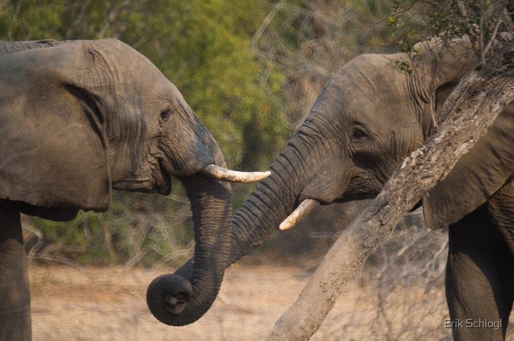 OK, let's shake trunks on it! by Erik Schlogl