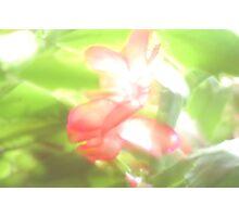 Ambrosia Photographic Print