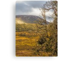 Autumn in Cradle Mountain, Tasmania #2 Canvas Print