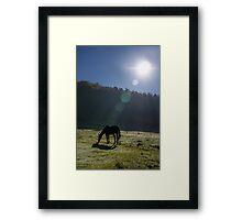 Horse in the sunlight Framed Print