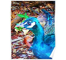 Surreal Blue Peacock Poster