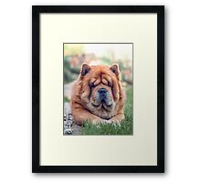 Chow portrait Framed Print