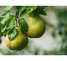 Ripe pears closeup Photographic Print