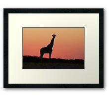 Giraffe Silhouette - Pink African Sunset Framed Print