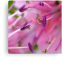 Purple Pollen Macro Canvas Print