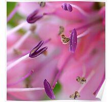 Purple Pollen Macro Poster