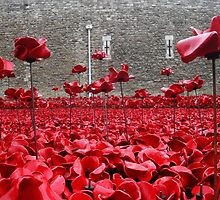 Tower Of London Remembers by Stephen Smith
