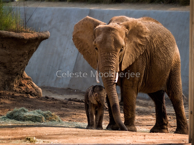 Mama Unngani and baby by Celeste Mookherjee