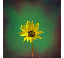 The yellow flower of my old friend Photographic Print