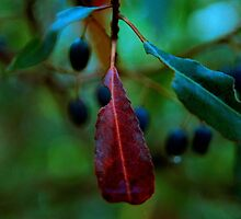berries & leaves (Fraser Island) by Janine Paris