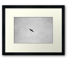 Black & White Bird Framed Print