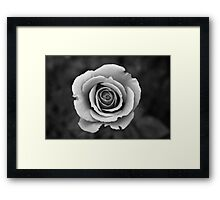 Black & White Rose Framed Print