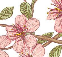 Pink sakura Sticker