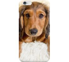 Perfect Puppy iPhone Case/Skin
