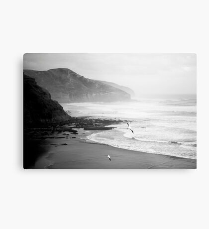 Gannets on Muriwai Beach. Metal Print