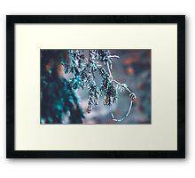 Frozen Pine Branches Framed Print
