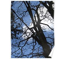 ***TREE/BLUE SKY Poster