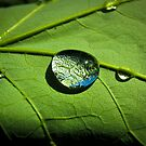 Raindrop Magnifier by Douglas  Stucky
