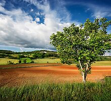 Walnut Tree by TonyPriestley