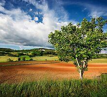 Walnut Tree by TonyPriestley