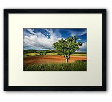 Walnut Tree Framed Print