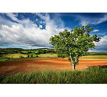 Walnut Tree Photographic Print